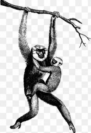 Spider Monkey Common Chimpanzee - Monkey Cartoon PNG
