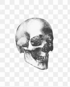 Skull - Skull Art Human Skeleton Human Skull Symbolism PNG