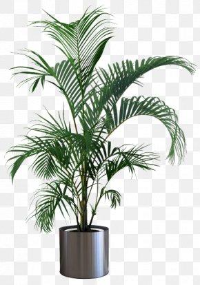 Plant - Houseplant Flowerpot Areca Palm Tree PNG