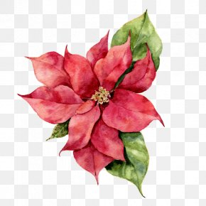 Painting - Poinsettia Watercolor Painting Stock Photography Christmas Day Illustration PNG