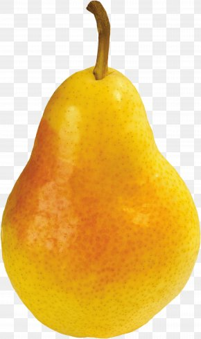 Pear Image - Citron Citrus Junos Tangelo Asian Pear Still Life Photography PNG