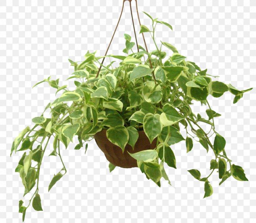 Houseplant Flowerpot Radiator Plants Ornamental Plant Png 917x800px Plant Bio Garden Branch Cut Flowers Flower Download