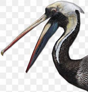 Bird - Zoo Tycoon 2 Digital Art Bird Animal PNG
