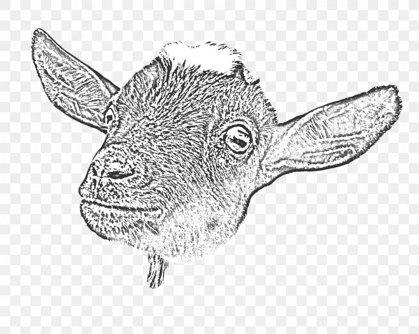 Goat Yoga Cattle Drawing Line Art, PNG, 1908x1526px, Goat, Animal, Artwork, Black And White, Caprinae Download Free