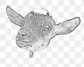 Goat - Goat Yoga Cattle Drawing Line Art PNG