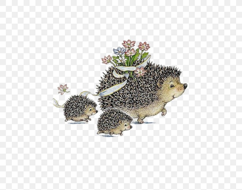Magnificent Hedgehog Birthday Greeting Card Drawing Illustration Png Personalised Birthday Cards Bromeletsinfo