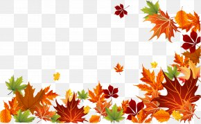 Vector Autumn Leaves Background - Autumn Leaf Color Autumn Leaf Color Euclidean Vector PNG