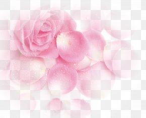 Pink Dream Rose Flower Petals - Garden Roses Beach Rose Pink Petal PNG