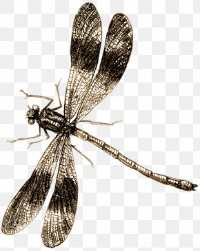 Dragonfly - Dragonfly Drawing Clip Art PNG