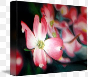 Painting - Gallery Wrap Canvas Painting Art Close-up PNG
