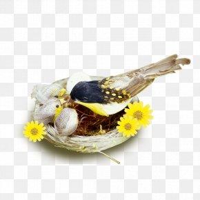 Nest In Bird - Edible Birds Nest Pillow Icon PNG