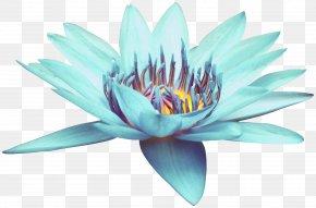 Blue Open Blue Lotus - Blue Download PNG