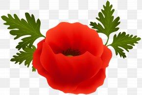 Poppy Clip Art Image - Poppy Clip Art PNG