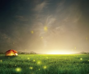 Night Sky Fireflies Grass Background - Samsung Galaxy S6 Samsung Galaxy S5 Smartphone Wallpaper PNG