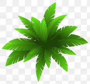 Green Plant Decoration Image - Plant Flower Clip Art PNG
