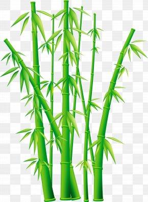 Bamboo - Bamboo Clip Art PNG