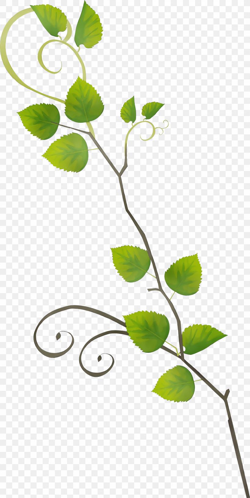 Flower Leaf Plant Branch Plant Stem, PNG, 1987x3954px, Watercolor, Branch, Flower, Leaf, Paint Download Free