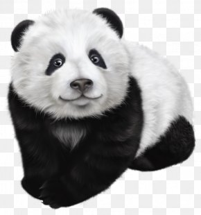 Panda Transparent Clip Art Image - Giant Panda Drawing Illustration PNG
