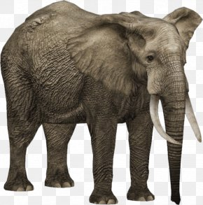 Elefant - Zoo Tycoon 2 African Bush Elephant African Forest Elephant Asian Elephant PNG