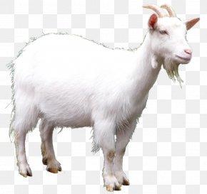 Goat Picture - Goat Clip Art PNG
