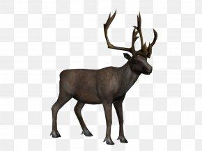 Reindeer - Reindeer Elk Arctic Tundra PNG