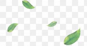 Flower Plant - Green Leaf Plant Flower PNG