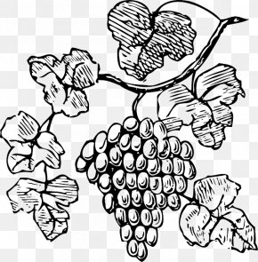 Grapes Drawing - Wine Common Grape Vine Champagne Clip Art PNG