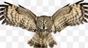 Owl - Great Horned Owl Bird Great Grey Owl Tawny Owl PNG