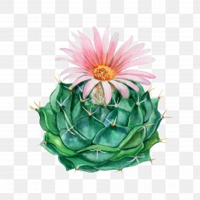 Cactus Blooming Season - Watercolor Painting Flowerpot Royalty-free PNG