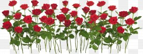 Rose Image, Free Picture Download - Rose Garden Flower Clip Art PNG
