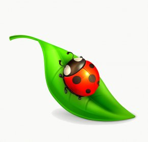 Coccinelle - Vector Graphics Stock Photography Royalty-free Ladybird Beetle Illustration PNG