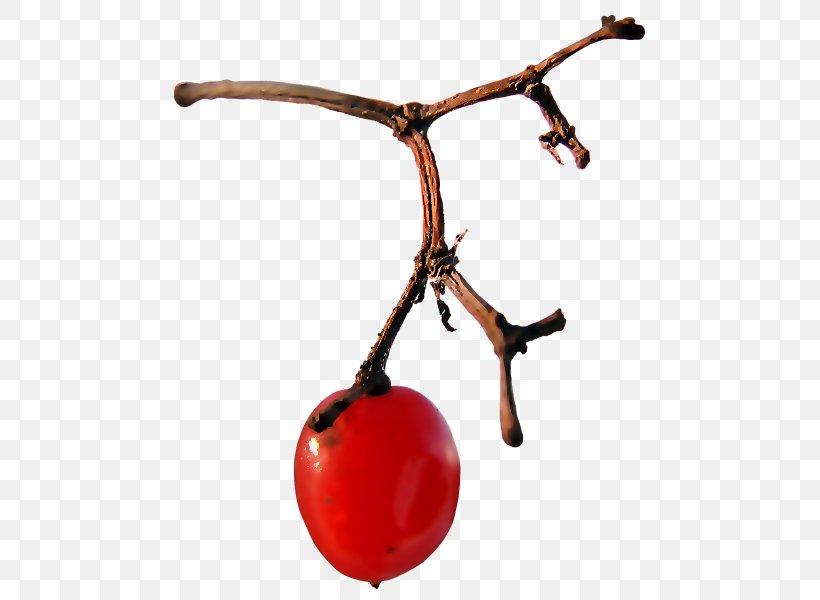 Fruit, PNG, 505x600px, Fruit Download Free
