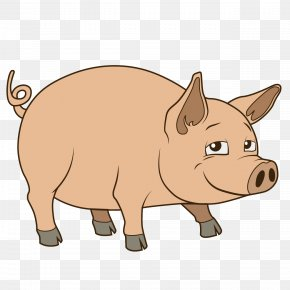 Cute Pig - Pig Drawing Royalty-free Illustration PNG
