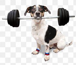 Pes - Seznam.cz Dog Breed Jack Russell Terrier Televize Seznam Dachshund PNG