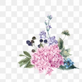 Hand-painted Flowers Free To Pull - Hydrangea Flower Royalty-free Illustration PNG
