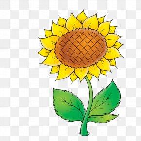 Plant - Common Sunflower Plant Clip Art PNG
