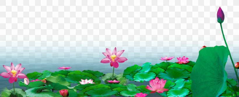 Heyexiang Mid-Autumn Festival Mooncake Chinese New Year, PNG, 2400x977px, Heyexiang, Aquatic Plant, China, Chinese New Year, Ecosystem Download Free