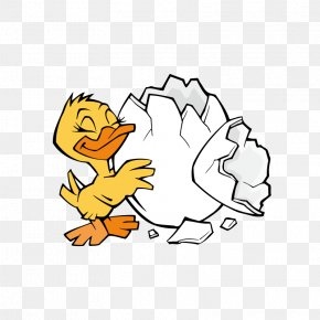 Duck - Duck Chicken Clip Art PNG