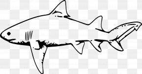 Fish Tank - Lemon Shark Drawing Clip Art PNG