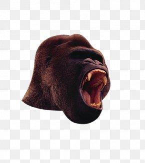 Red Gorilla - Western Gorilla Chimpanzee Orangutan Gorilla Suit PNG