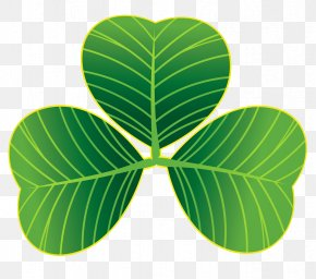 St Patricks Day Shamrocks PNG Clipart - Saint Patrick's Day Shamrock March 17 Clip Art PNG