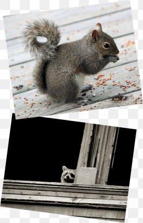 Chipmunk Wildlife Montgomery County Animal Fox Squirrel PNG