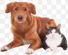 Cat - Cat Dog Veterinarian Pet Clinique Vétérinaire PNG