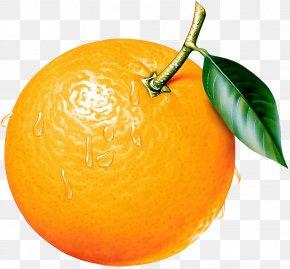 Orange Clipart Picture - Orange Clip Art PNG