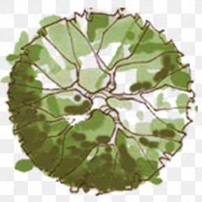 Plan - Tree Site Plan Landscape Architecture PNG