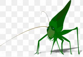 Grasshopper Cartoon Images - The Ant And The Grasshopper Clip Art PNG