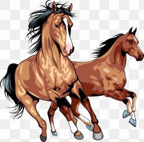 Horse - Horse Clip Art PNG