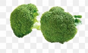 Green Broccoli - Broccoli Cauliflower Cabbage Nutrition Food PNG