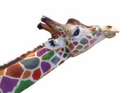 Giraffe - West African Giraffe African Elephant Stock Photography PNG