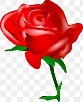 Rose - Valentine's Day Rose Flower Bouquet Clip Art PNG